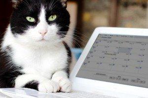 Cool cat checks calendar